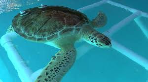 new marine center teaches about coastal ecosystem sea turtles too