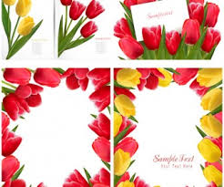tulips borders clip art 46