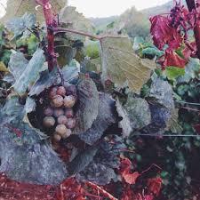 spirit halloween grapevine spotlight on fall how to celebrate autumn in greece u2014 the