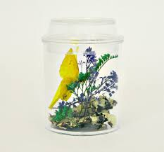 hello wonderful butterfly and insect terrarium kits