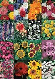 946 best flower garden images on pinterest flower gardening