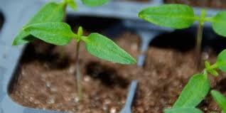 how to start your indoor vegetable garden