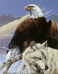 eagle and wolf prints by gary ampel at allposters com au