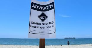 increased sharks sightings take a bite out of california u0027s summer