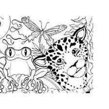 rainforest coloring pages funycoloring