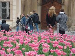 imagenes flores bellisimas flores muchas flores bellisimas picture of old town square