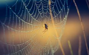 spider wallpaper android apps on google play