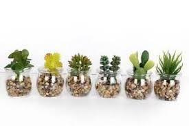 mini plants set 6 mini artificial small succulent cactus cacti plants glass pot