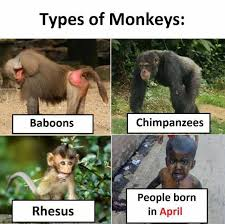 Baboon Meme - dopl3r com memes tvpes of monkeys baboons chimpanzees people