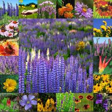 growing native plants from seed wildflower seeds flower bulbs perennials vermont wildflower farm