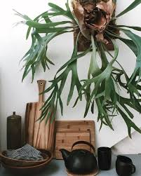 Home Decorating Plants 2566 Best Green Home Images On Pinterest Plants Indoor Plants