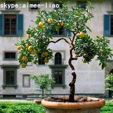 q122202 artificial bonsai tree artificial plants for sale mini