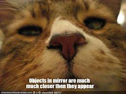 Meme Smile - 12 hilarious cat memes to make you smile we love cats and kittens