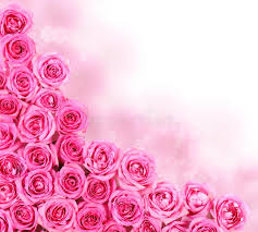 hot pink roses hot pink roses border stock image image of flora bright 38934037