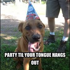 Birthday Meme Dog - incredible happy birthday memes for you top collections