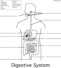 15 best digestive system images on pinterest teaching science