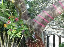 hide u0027n u0027 seek children u0027s trail brisbane botanical gardens brisbane