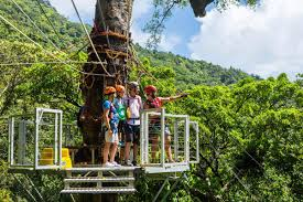 Treetop Canopy Tours by Jungle Surfing Canopy Tours Cape Tribulation Australia Top