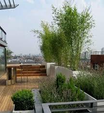 pflanzen als sichtschutz fã r balkon die besten 25 dachterrasse ideen auf terrasse balkon