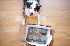 australian shepherd uses 7 delicious dog food companies that will deliver meals right to
