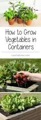 Patio Vegetables by Best 25 Easy To Grow Vegetables Ideas On Pinterest Growing