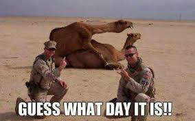 Hump Day Camel Meme - picz i like guess what day it is camel meme