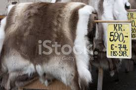 reindeer skin sale bergen stock photos freeimages