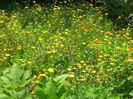 drought tolerant native plants meadow muffin gardens choose drought resistant plants