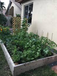 growing organic vegetables in your own backyard jaguar garden