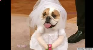 dog wedding dress kate middleton wedding dress now a dog costume photos