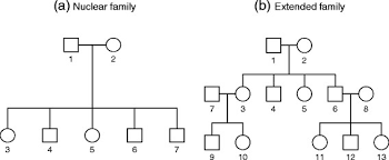 family tree there are two different types of family structures