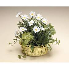 sympathy plants dish garden with daisies tulsa florist westside flowers gifts