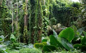 hawaii tropical botanical garden forest tropical wallpaper