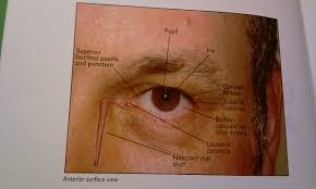Eye Ducts Anatomy Anatomy Of The Eye All Bleeding Stops Eventually Direct
