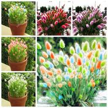 popular potted ornamental grass buy cheap potted ornamental grass