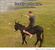 funny donkey thefunnyplace
