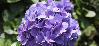 Flowers By Violet - wholesale farm direct fresh cut flowers beauty delivered