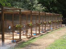 Best Chicken Coop Design Backyard Chickens by Love The Idea Of The Flowers On The Pen Chicken Coop Ideas
