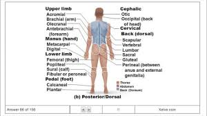 Essentials Of Human Anatomy And Physiology Notes Quizlet Human Anatomy Chapter 1 Human Anatomy And Physiology