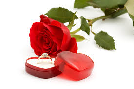 red rose rings images Red roses and wedding rings 51426 valentine 39 s day festival jpg