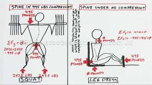 Muscles Used During Bench Press Squat Myths Scooby U0027s Home Workouts