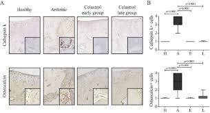 effect of celastrol on bone structure and mechanics in arthritic