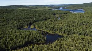 Russian Boreal Forest Disturbance Maps by Calculating Carbon Stocks The Value Of Carbon In Boreal Forest