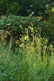 Wilmington Nc Botanical Gardens by Events North Carolina Native Plant Society