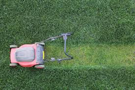 interesting facts about lawn care