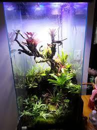 469 best vivarium terrarium images on pinterest terrarium