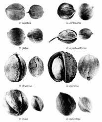native plants of arkansas nuts wild arkansas