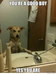 Yes This Is Dog Meme - self affirmation dog meme weknowmemes
