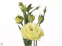 Lisianthus Flower Purple 25in Eustoma Lisianthus Piccolo White Budget Wedding Pinterest