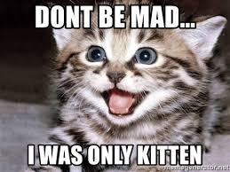 Mad Kitty Meme - images mad kitten meme